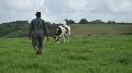 5e congr�s � Dijon du 5 au 7 mai - Les services de remplacement veulent accompagner les mutations du monde agricole