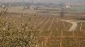 Plan strat�gique viticole - Les actions � mener pour une fili�re plus comp�titive