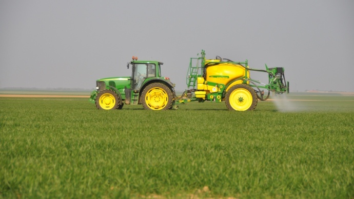 Désherbage du blé.