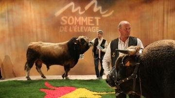 Concours national Aubrac au Sommet de l'élevage 2014.