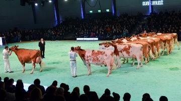 Palmar�s et catalogues des concours de Lausanne
