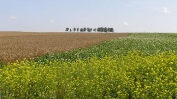 M�t�o et exportations plombent le bl�, le ma�s monte et le soja se tasse