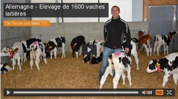 1.600 vaches laiti�res r�gl�es comme du papier � musique