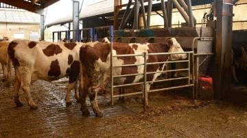 Le propyl�ne glycol, seulement pour les vaches qui en ont besoin