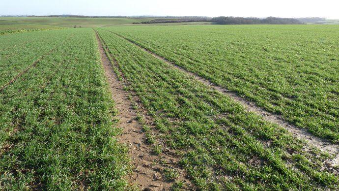 Fertiliser avant de désherber pénalise le rendement de 13q/ha