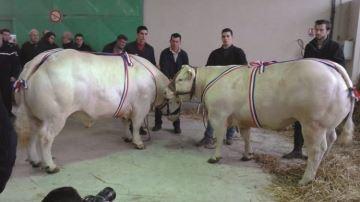 A Varennes-sur-Allier - Les prix restent stables
