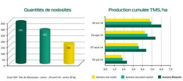 L'enrobage de semences de luzerne Rhizactiv augmente le rendement