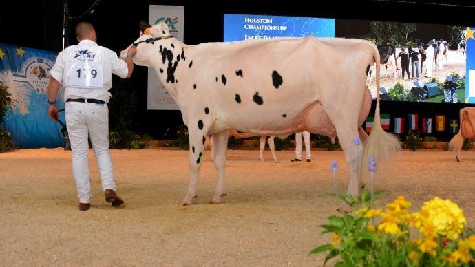 C9 N°179 L'italienne Dotti Stanleycup White à Errera Holsteins & La corte Di Dotti, championne réserve intermédiaire.