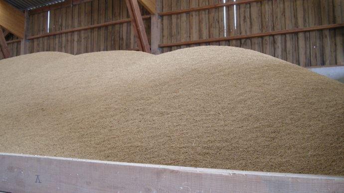 Stocks de grains: ventiler les céréales dès la récolte