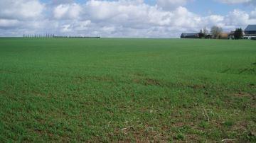 Inquiétudes pour le blé d'hiver américain