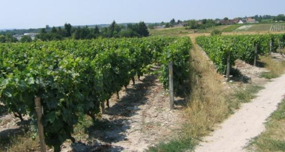 Vignoble du Bordelais.