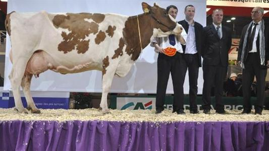 Brune, Simmental, Pie Rouge - Le nouvel Isu accorde davantage de place aux fonctionnels