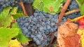 Agenda - Tous les �v�nements de la fili�re viti-vinicole en un clic !