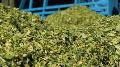 Automatisation de l'alimentation - Les retours d'exp�riences des premi�res fermes �quip�es