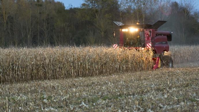 R�colte ma�s grain 2013 - Une ann�e noire pour le revenu des ma�siculteurs