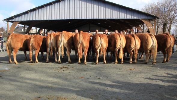 Limousins inscrits pour le cga sia 2014 - Billet pour le salon de l agriculture ...