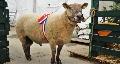 Sia / Cga 2014 � Ovins - Palmar�s des concours des races ovines du Salon de l'agriculture