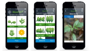 Appli mobile de détermination de la flore adventice.