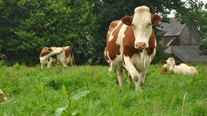 normes de rejet d'azote des vaches laitières