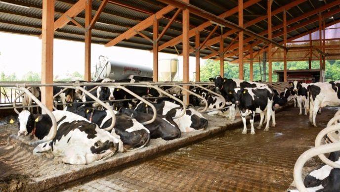 Elevage laitier en Allemagne. Les producteurs de lait en France ont de nombreux atouts pour être compétitifs à condition de s'engager dans un vaste programme de modernisation de leurs installations.