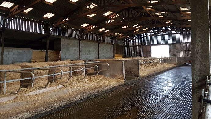 Stabulation vaches laitières en logettes paillées