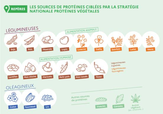 Les protéines concernées par la stratégie nationale pour les protéines végétales
