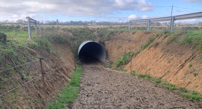 Boviduc: tunnel pour faire passer les vaches sous la route
