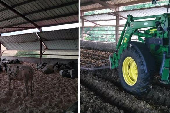 litiere compostee pour vaches laitieres