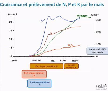 Croissance et prélèvement de NPK par le maïs