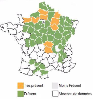 Répartition géographique du coquelicot.