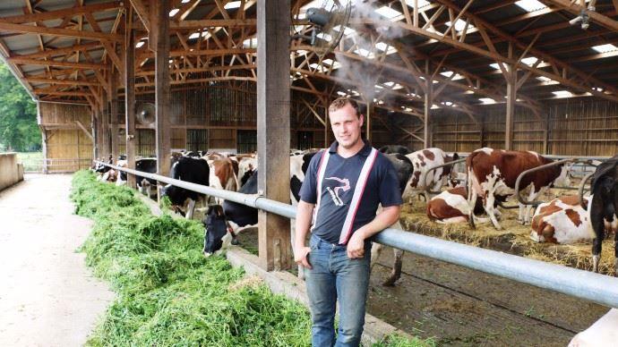 Julien Lecompte est totalement satisfait de son investissement dans le traitement de l'eau et la brumisation car il a permis une augmentation de la productivité des animaux qui semblent être en meilleure forme.