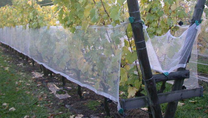 filet arboriculture