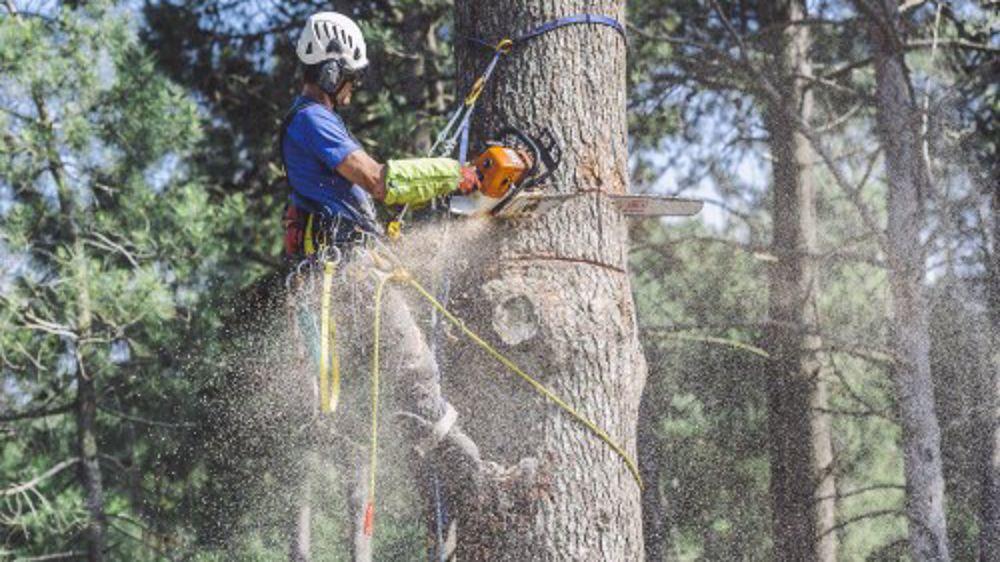 rencontres nationales d arboriculture 2021)