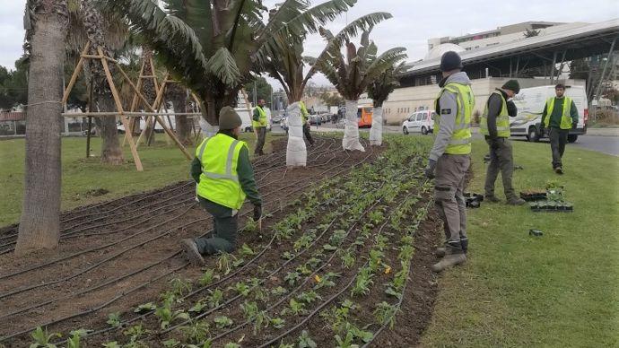 Opération de plantation et d'irrigation à Montpellier.