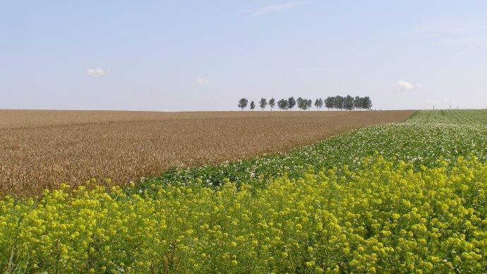 Le Farm Bill de 2014 : quoi de neuf ?