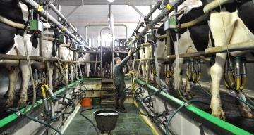 Un troupeau de 35,4 millions de vaches