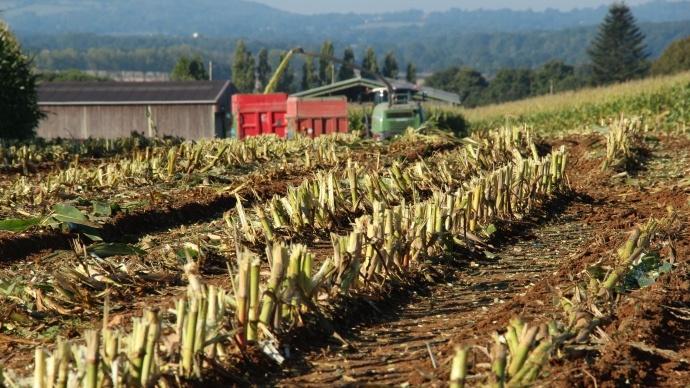 Conditions climatiques favorables pour le maïs chinois
