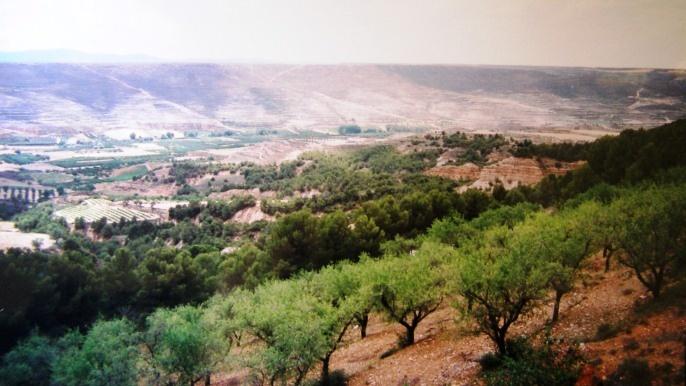 L'Espagne est le premier producteur mondial d'huile d'olives.