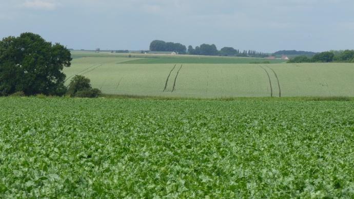 Pour un statut d'avenir au service de l'entreprise agricole (13/13)
