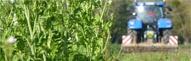 Tag couverts végétaux