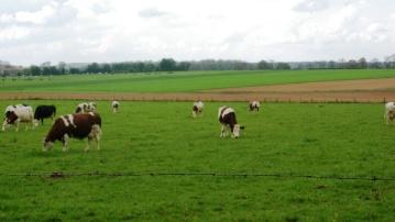 Les effectifs de vaches laitières en hausse de 2 %