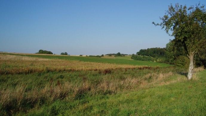 Paysage agricole