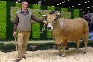 Les palmarès des concours bovins du Sima