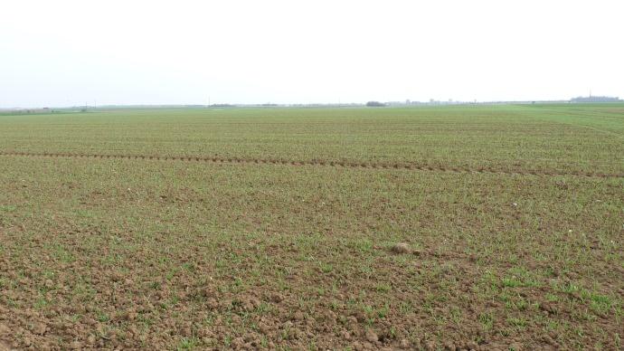 La localisation de l'engrais au semis d'orge de printemps : une alternative intéressante en année sèche