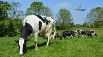 Le drone remplacera-t-il bientôt l'herbomètre ?