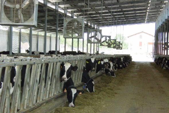 Ventilateurs vaches laitières