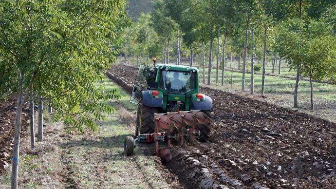 Parcelle en agroforesterie