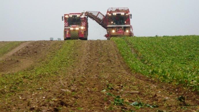 La production mondiale de sucre ne devrait pas dépasser 171 Mt.