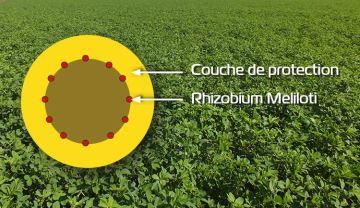 Le nouveau procédé révolutionne l'inoculation des semences