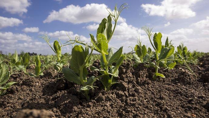 Aides couplées végétales